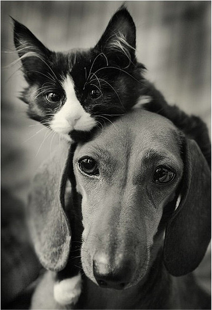 Raising Siblings to Get Along Like Cats &Dogs